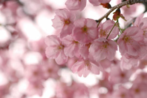 Пословицы о весенних месяцах