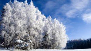 Пословицы о зиме для школьников 2-3 классов